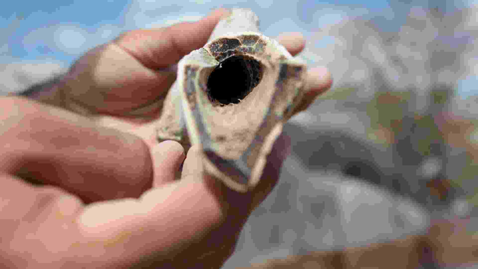 7.mai.2013 - Seca revela fósseis de mais de 70 mil anos em Caruaru - Diogenes Barbosa/Jornal Vanguarda