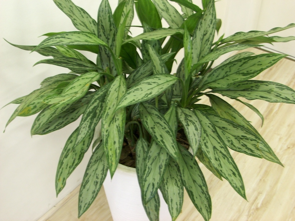 Veja como cultivar plantas em ambientes internos com pouca for Plantas para dentro de casa sombra