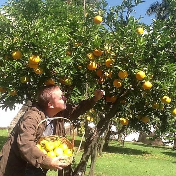 9.mai.2013 - Gugu colhe tangerina no quintal de casa