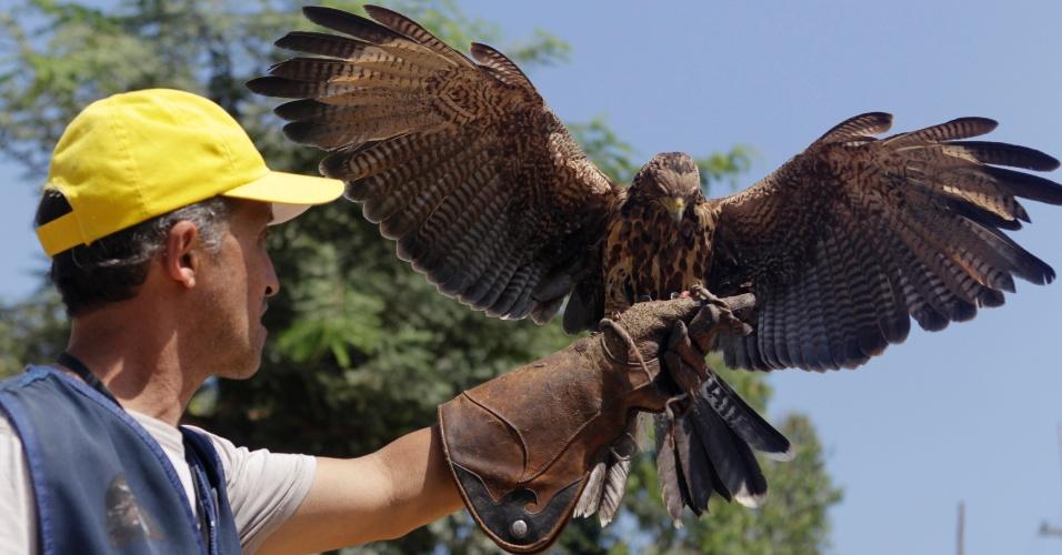 9.mai.2013 - Um falcão pousa na mão do treinador Oscar Beingolea durante evento no Dia Internacional dos Pássaros Migrantes, no jardim zoológico de Lima (Peru)
