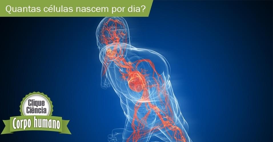 Clique Ciência: Quantas células do corpo nascem por dia?