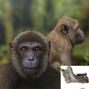 Fósseis de 25 milhões de anos mostram conexão entre grupos de primatas