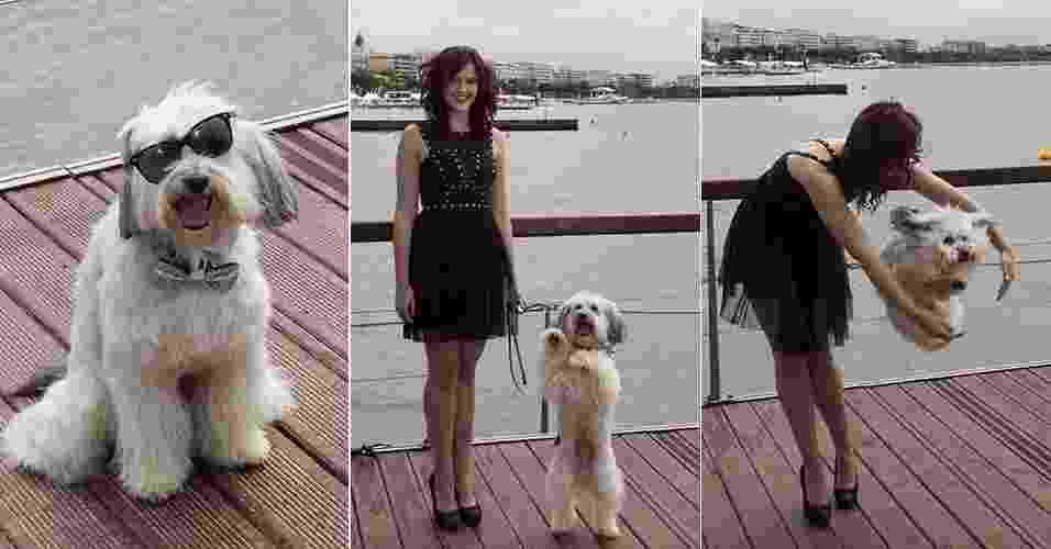 """16.mai.2013  - Cão Pudsey, vencedor do """"Britain's Got Talent"""", está em Cannes para a divulgação de """"Pudsey: O Filme"""". Com a adestradora Ashleigh, o cão saltou e fez poses para os fotógrafos - Joerg Reuter/EFE"""