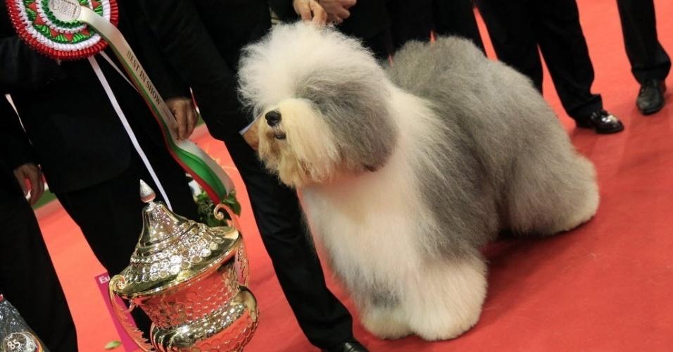 19.mai.2013 - O sheepdog Jimmy posa com o troféu de melhor cão durante competição mundial, em Budapeste, na Hungria, neste domingo (19). Mais de 17 mil cães de 70 países participaram da competição
