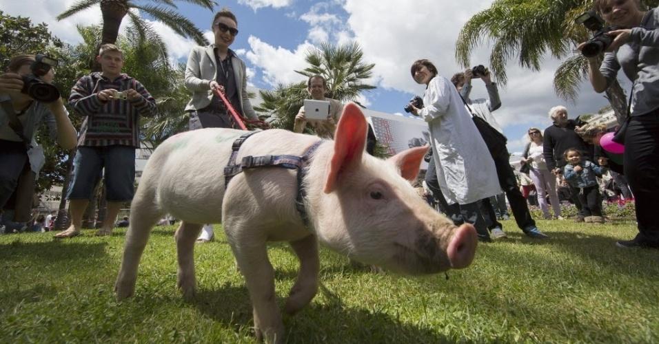 19.mai.2013 - Porquinho anda no gramado do Palais des Festivals durante o festival de Cannes