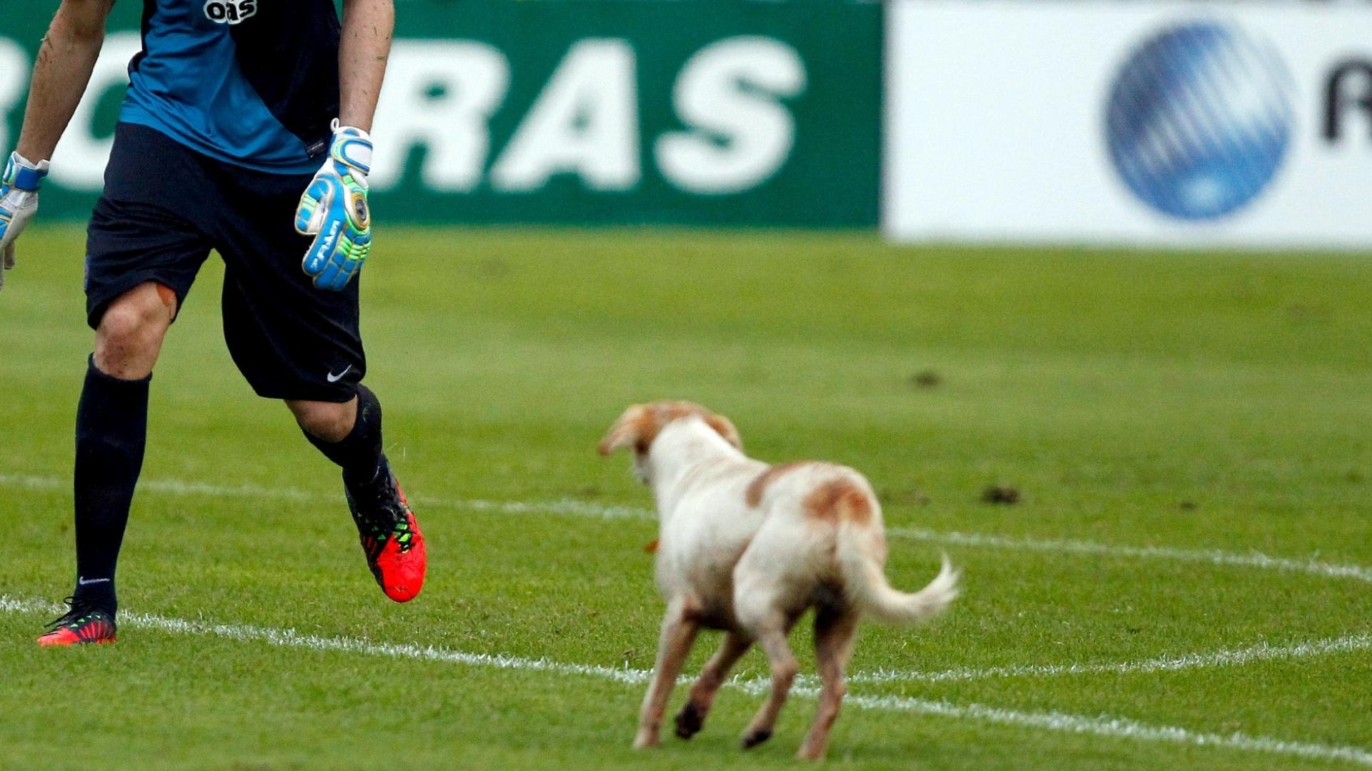Omar, do Bahia, tenta tirar cão de campo na partida contra o Vitória, válida pela final do Campeonato Baiano, realizada neste domingo no estádio do Barradão, em Salvador (BA)