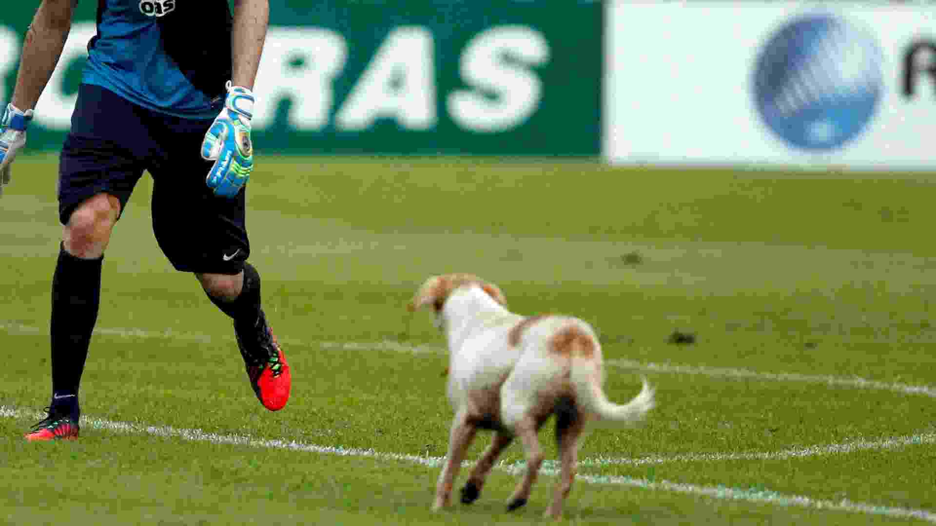 Omar, do Bahia, tenta tirar cão de campo na partida contra o Vitória, válida pela final do Campeonato Baiano, realizada neste domingo no estádio do Barradão, em Salvador (BA) - FELIPE OLIVEIRA/AGIF/ESTADÃO