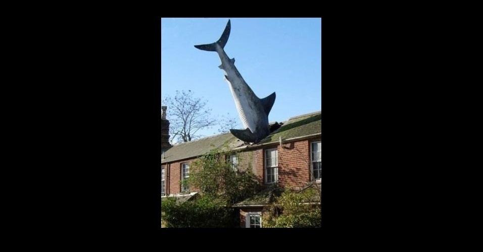 A modinha da web Shark Attack - Ataque de Tubarão - consiste em brincar com imagens de tubarões, fazendo montagens e colocando o bichano em diferentes cenários e posições. Nas mãos dos usuários, o animal foi parar em cima do telhado, na piscina de bolinhas e ganhou até dentes de humano; veja as brincadeiras