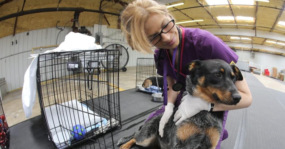22.mai.2013 - Veterinária cuida de cachorro perdido no tornado que atingiu a cidade de Moore, em Oklahoma (EUA). Pelo menos 24 pessoas morreram devido à tempestade do último dia 20, incluindo sete crianças em uma escola