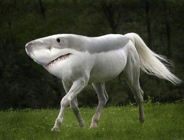 Resultado de imagem para hibrido tubarao cavalo
