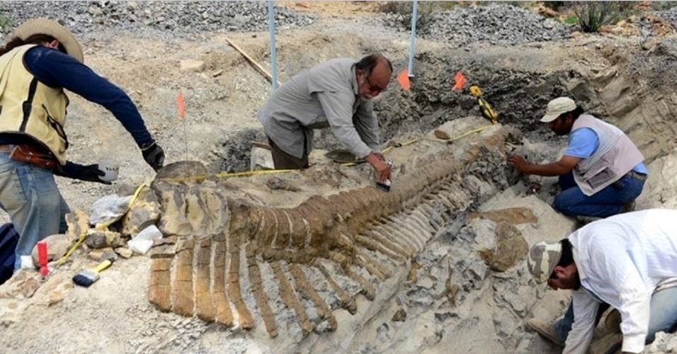 Arqueólogos recuperaram 50 vértebras da única cauda articulada de um dinossauro descoberta no México. Os restos pertencem a um hadrossauro de 72 milhões de anos e somam cinco metros, quase a metade do comprimento do herbívoro. Os ossos foram encontrados em 2005 em uma jazida de Coahuila, mas só começaram a ser escavados no último dia 2 de julho, segundo o Instituto Nacional de Antropologia e História do México