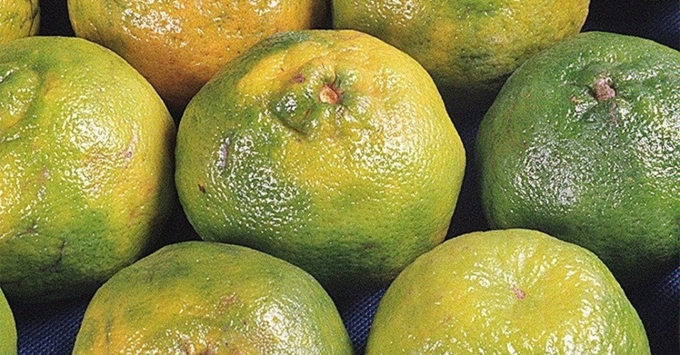 tangerina, mexirica, poncã; Mídia Indoor