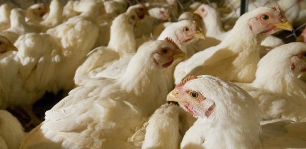 Entidade diz que milhões de animais podem ficar sem ração devido à greve - Pedro Silveira/Folhapress