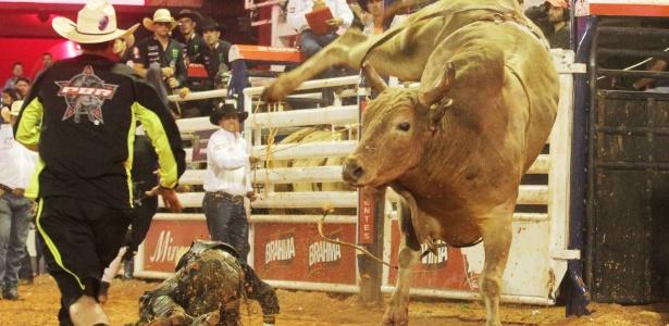 Animais teriam sido queimados com pontas de cigarro e levavam choques antes de serem soltos na arena de rodeio