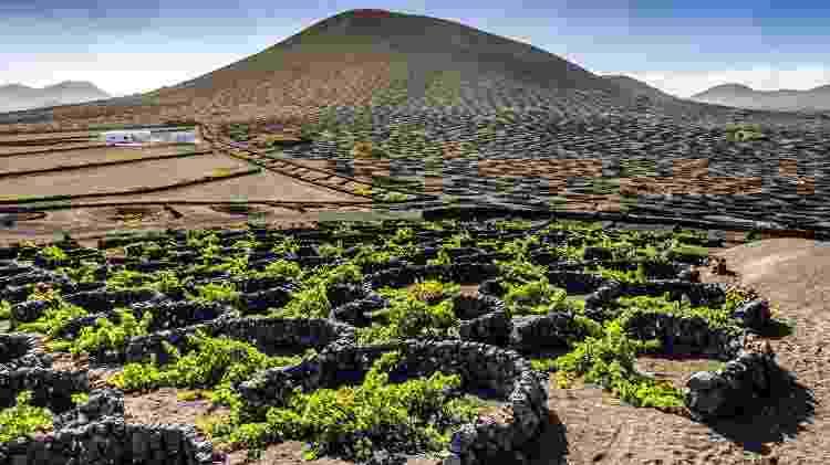Vinhedos em terreno vulcânico em Lanzarote, nas Ilhas Canárias  - Getty Images - Getty Images