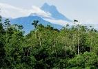 Pesquisadores descobrem novas espécies em montanha mais alta do Brasil - Divulgação