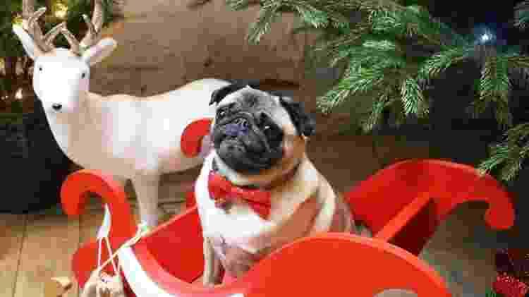 Pug Café vai realizar uma festa especial para receber cães - Divulgação