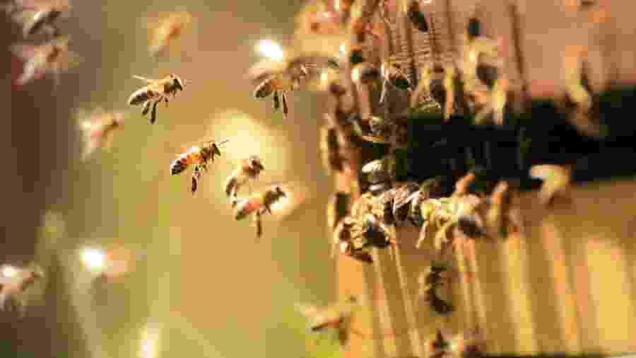 A morte e o desaparecimento das abelhas vêm sendo registrado em diversas partes do mundo - Getty Images/iStockphoto