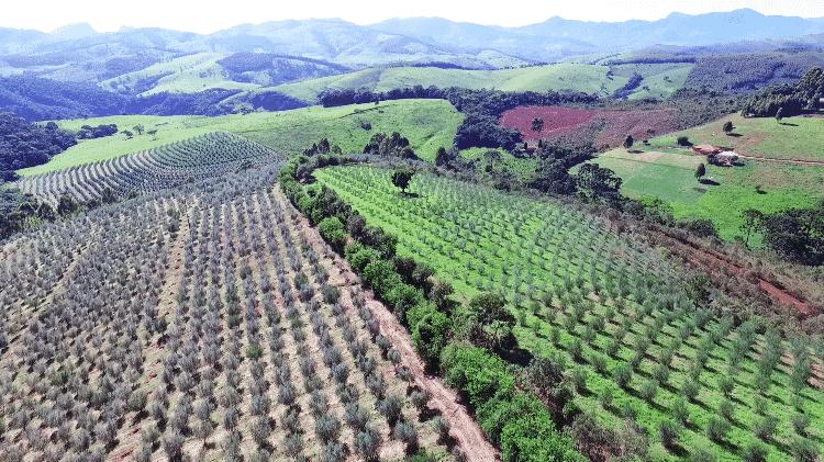 Vista aérea das oliveiras na produtora mineira Olibi - Divulgação