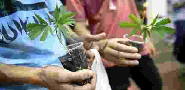 Em 2014, o Uruguai foi o primeiro país do mundo a regulamentar o consumo da maconha, que passou a ser vendida em farmácias para usuários registrados - Nicolas Celaya/Xinhua