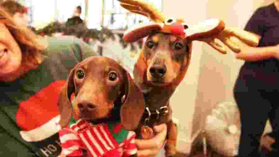 Cachorros da raça Dachshund são convidados especiais de café em Londres - Divulgação