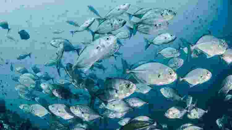 As espécies de atum Bathi e Kihada são as mais encontradas no Brasil - Sebastian Pena Lambarri/Unsplash
