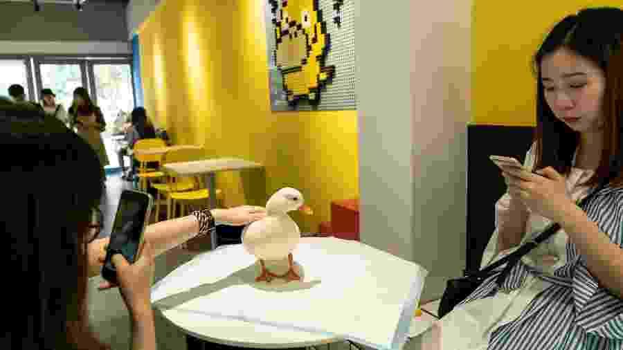 Turistas tiram foto com pato no Hey! Wego  - AFP