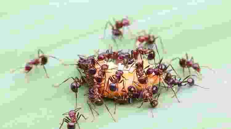 Quando os humanos deixarem o planeta, os insetos terão um renascimento rápido - Getty Images - Getty Images