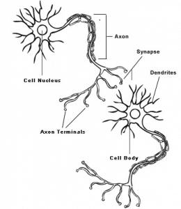 sinapse_