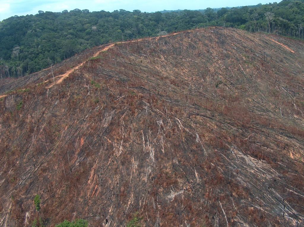 Desmatamento zero e imediato é só a primeira medida a ser tomada, afirma Nobre