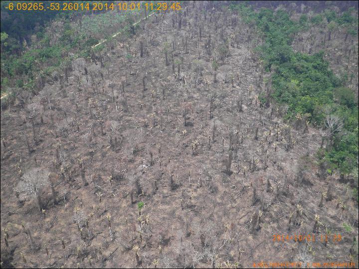 A cara da degradação: floresta vai raleando com retirada de madeira e queimadas. No Mato Grosso, segundo o Imazon, a degradação subiu 1000% em outubro. Esta foto foi feita há um mês durante validação de campo dos dados de satélite em São Felix do Xingu (PA). Fonte: INPE