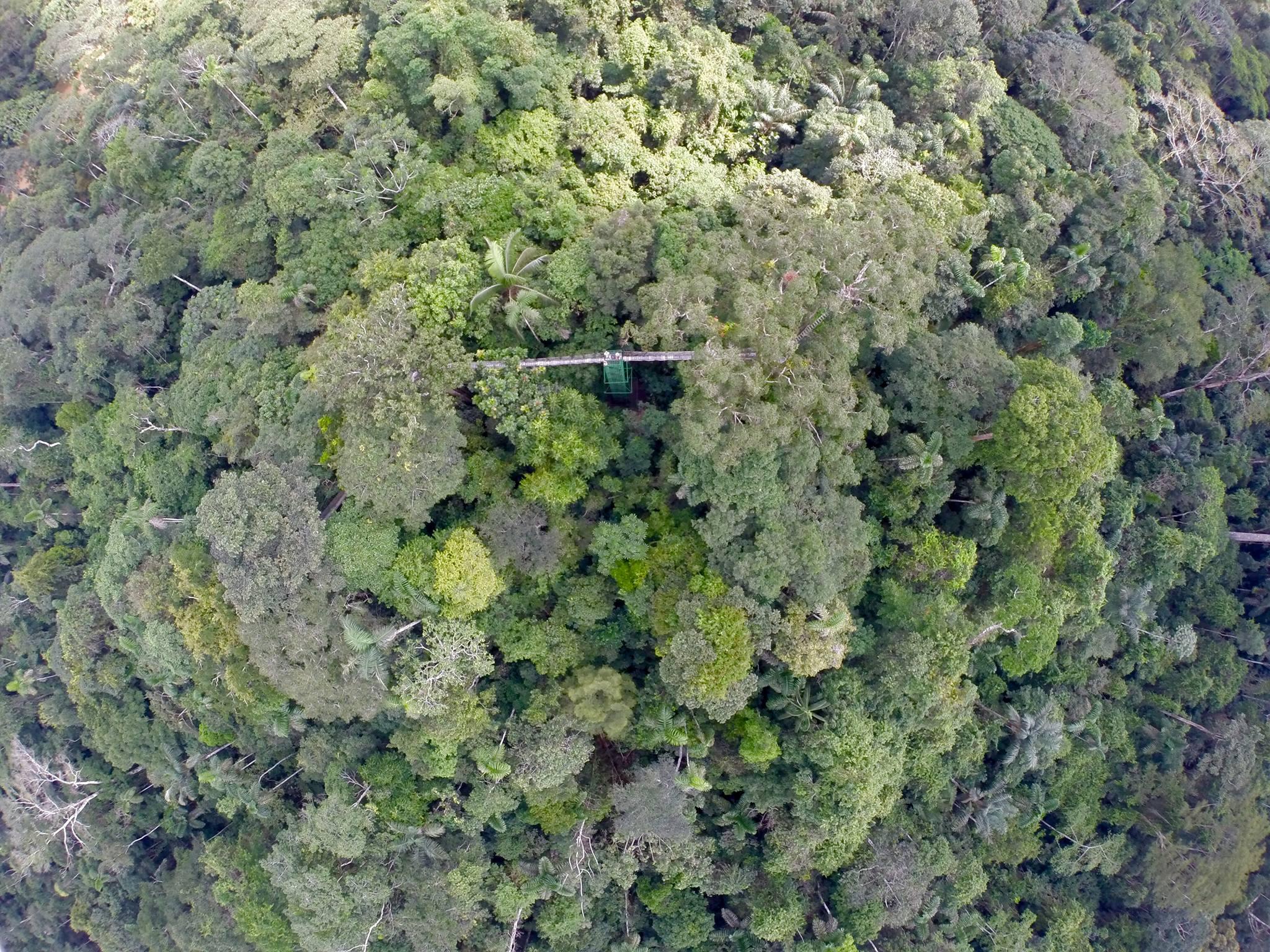 Vista aérea da torre de observação da Estação de Pesquisa Tiputini