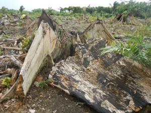 Área de desmatamento recente encontrada pela equipe do Terra-i em viagem de validação de dados. Foto: Terra-i