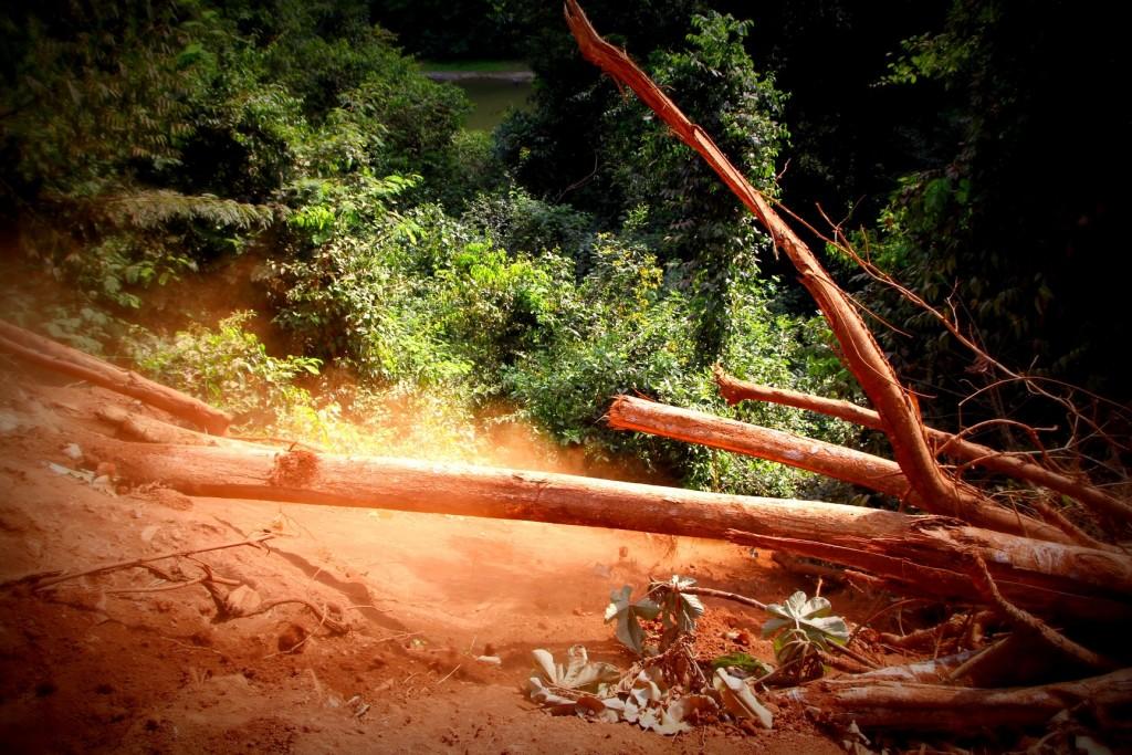 Desmatamento da Vale às margens do rio Sossego em área retomada pelo acampamento Planalto Serra Dourada