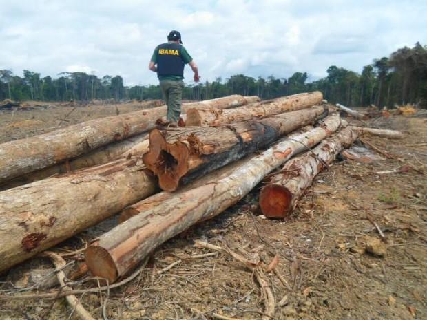 Agente do Ibama em fiscalização de madeireiras em Paragominas, Pará. Foto: Ibama/divulgação