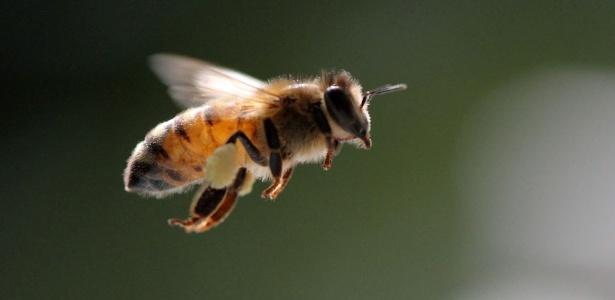 Enxames de abelhas atrapalharam um voo da American Airlines (Foto: Zachary Huang/EFE)