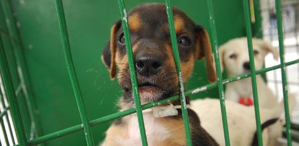 17102012---cachorro-e-exposto-em-feira-de-adocao-realizada-pelo-centro-de-controle-de-zoonoses-da-prefeitura-de-osasco-cidade-da-grande-sao-paulo-1350491639761_615x300