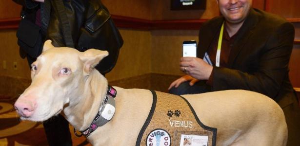 5jan2015---cachorro-veste-o-acessorio-tagg-gs-pet-tracker-uma-especie-de-gps-para-bichos-de-estimacao-um-aplicativo-desenvolvido-por-scott-neuberger-direita-consegue-monitorar-a-localizacao-do-1420497510993_615x300