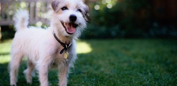 cachorro-cao-feliz-emocao-1381261631476_615x300