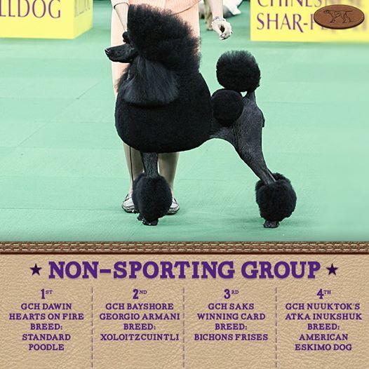 non sporting
