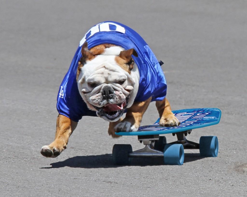 Tillman entrou no Guinness como o cão mais rápido nos 100 metros com skate