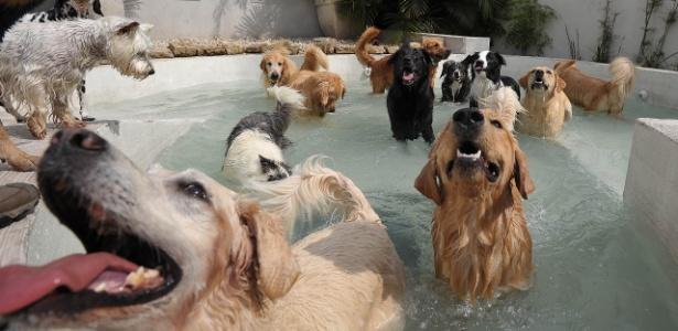 4abr2013---caes-brincam-em-piscina-de-creche-para-pets-em-sao-paulo-1365108410787_615x300