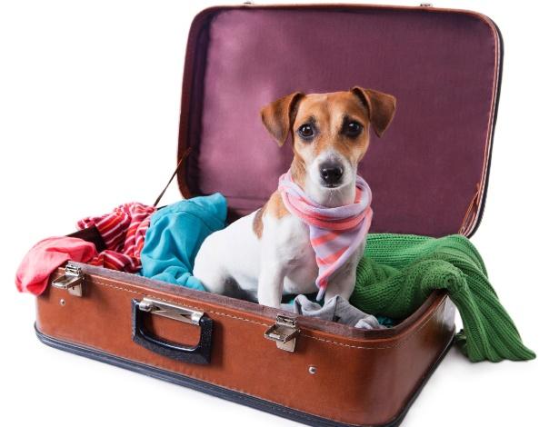 cachorro-em-mala-de-viagem-1420834703599_615x470