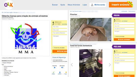 Após abaixo-assinado na web, OLX promete mais rigor com a