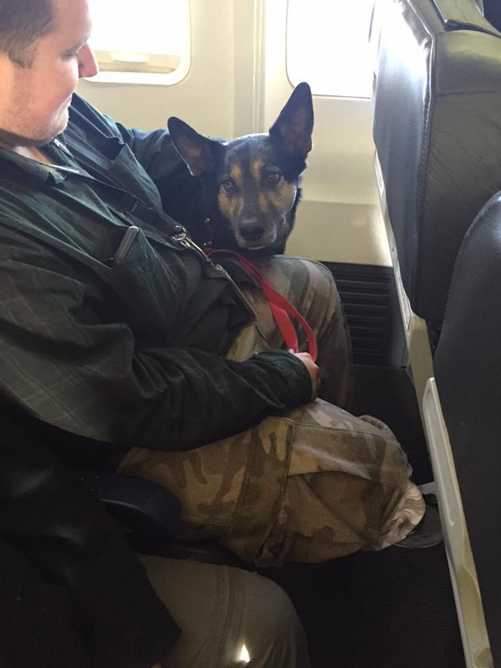 Dono viaja com o cachorro após incêndio no Canadá - Foto: Facebook/Wanda Murray