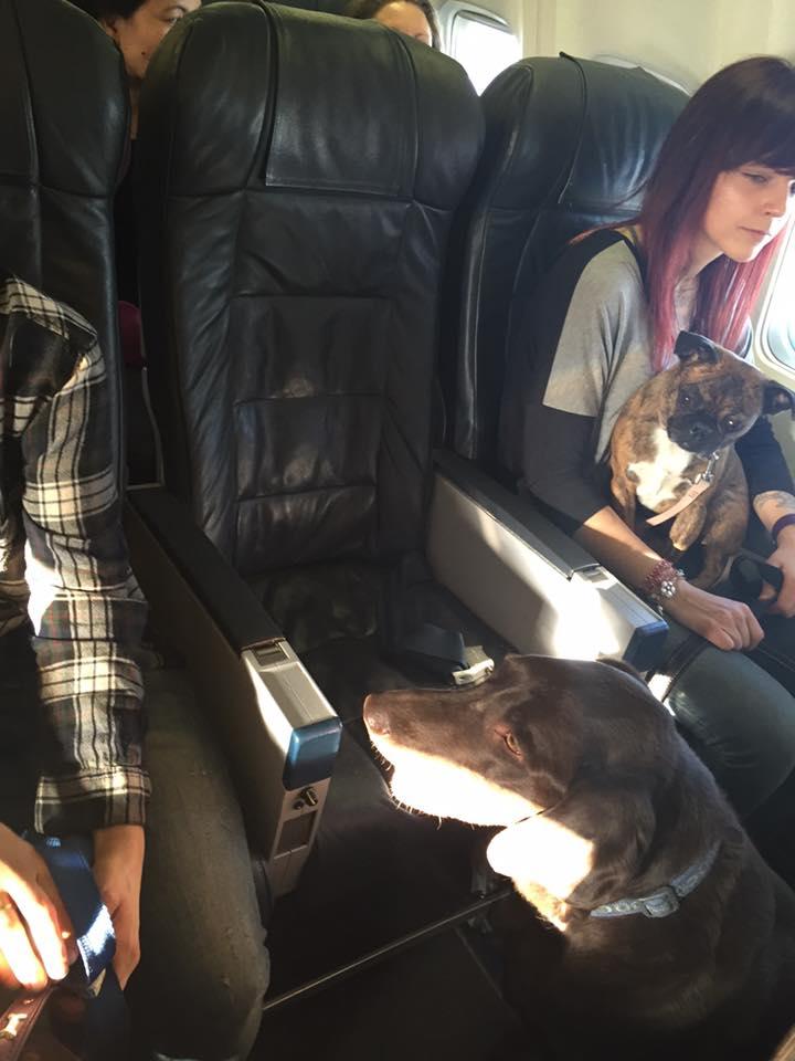 No colo, no chão... os cães foram por todos os lados do avião - - Foto: Facebook/Wanda Murray