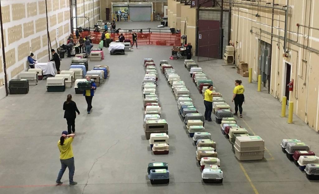 Foto da Sociedade Protetora dos Animais mostra caixas com bichos que foram resgatados