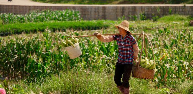 Do campo ao site: e-commerce faz produtor rural vender direto ao consumidor