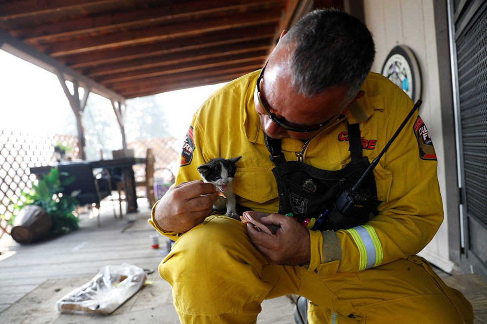 Cal Fire San Mateo-Santa Cruz Battalion Chief Aldo Gonzales feeds an injured kitten at a home while battling the Clayton Fire at Lower Lake in California, U.S. August 15, 2016. REUTERS/Stephen Lam ORG XMIT: CKE25