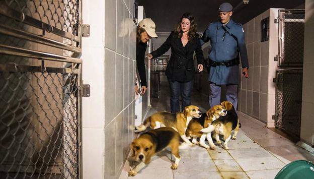 Câmara cria comissão sobre caso dos beagles